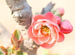 近くの花のアップ - No.1107728