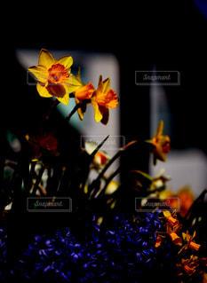 近くの花のアップの写真・画像素材[1107731]