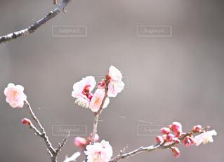 近くの花のアップの写真・画像素材[1107744]