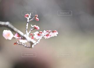 近くの花のアップの写真・画像素材[1107745]