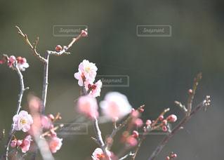 近くの花のアップの写真・画像素材[1107747]