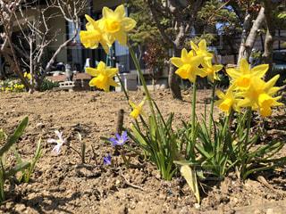 黄色の花の写真・画像素材[1107748]