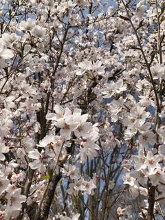 木の花の花瓶の写真・画像素材[1108236]