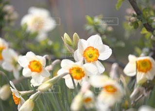近くの花のアップ - No.1111068