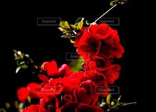 近くの花のアップ - No.1111073