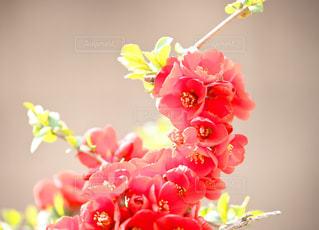 花の花束 - No.1111074