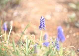 近くの花のアップの写真・画像素材[1111095]