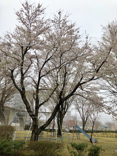 公園の大きな木 - No.1111190