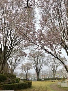 公園の大きな木 - No.1111191