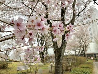 木の上のピンクの花で一杯の花瓶の写真・画像素材[1111192]