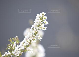 近くの花のアップ今鮮やかな庭の世界の写真・画像素材[1111206]