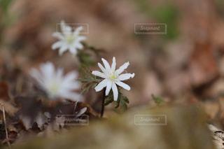 福島県白河市にある天狗山の春の写真・画像素材[1111236]
