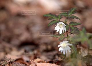 福島県白河市にある天狗山の春の写真・画像素材[1111242]