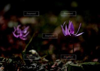 天狗山の春に咲く花々の写真・画像素材[1111363]