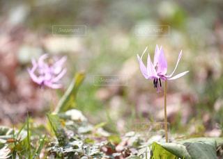 天狗山に春が来ました。の写真・画像素材[1111365]