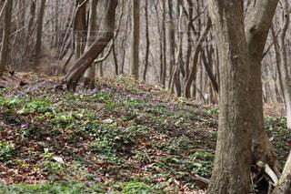 木々の木陰で!の写真・画像素材[1111366]