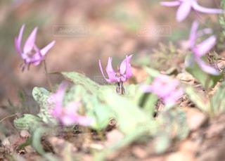 天狗山の春爛漫の写真・画像素材[1111369]