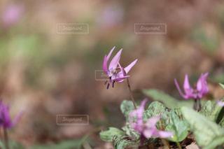 天狗山の春の写真・画像素材[1111371]