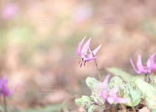 天狗山の春の写真・画像素材[1111372]