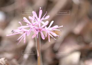 天狗山の春の花々 - No.1114026