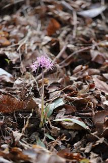ひっそりと咲く花々 - No.1114087