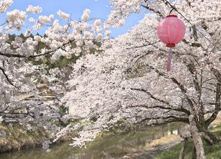 春の花見祭り - No.1123270