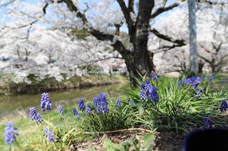 春を感じ、散歩に!の写真・画像素材[1123273]