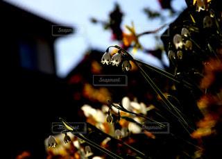 クローズ アップの光の写真・画像素材[1123278]