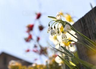 庭に咲く花たちの写真・画像素材[1123279]
