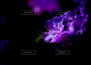 紫色の花一杯の花瓶 - No.1134610
