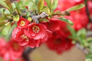 庭の色の写真・画像素材[1134615]