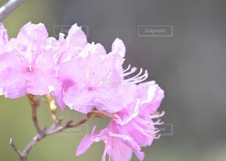 庭の色の写真・画像素材[1134616]