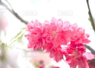 春の色の写真・画像素材[1134635]