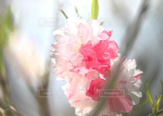 春を待ちわびての写真・画像素材[1134636]