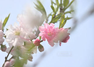 春を待ち!の写真・画像素材[1134638]