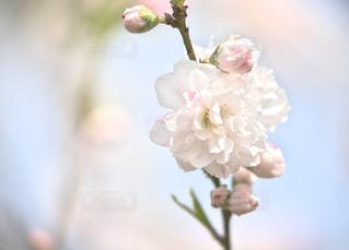 花を待つの写真・画像素材[1134639]