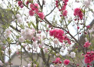 庭の色の写真・画像素材[1134640]