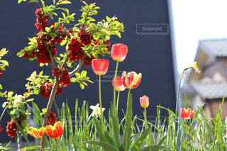 庭の色に癒されて。 - No.1145895