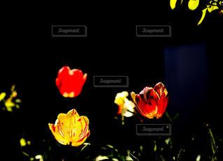 お花の街灯の写真・画像素材[1145898]