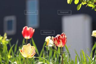 彩とりどりの庭に癒されて - No.1145900
