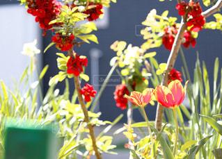 庭の色に癒されての写真・画像素材[1145905]