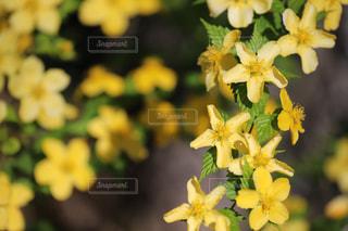 黄色の花 - No.1146053