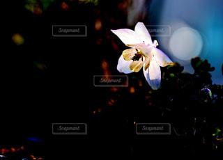 輝く花の写真・画像素材[1146804]