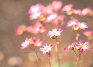 ピンクの花 - No.1153013