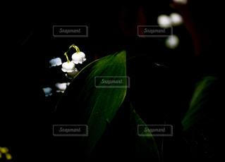 小人の町の街灯の写真・画像素材[1157882]