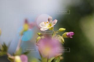 スポットライトの写真・画像素材[1182192]
