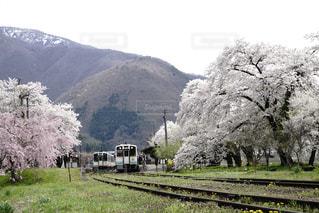 ローカル線の春景色の写真・画像素材[1186420]