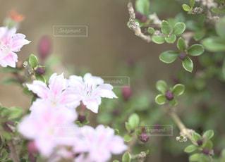 庭を彩るの写真・画像素材[1212393]