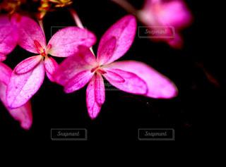 紫陽花も鮮やかに!の写真・画像素材[1266392]