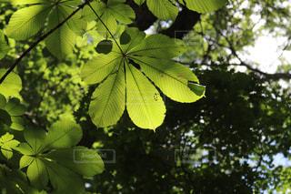 大きな葉っぱで木陰を作るよ!の写真・画像素材[1311941]